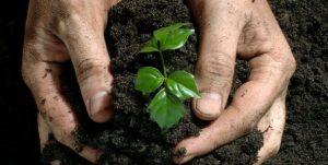Autorizarea depozitelor de păstrare a produselor  de uz fitosanitar și a fertilizanților
