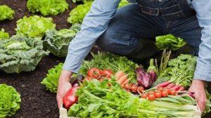 Seminar pentru legumicultori