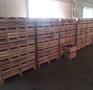 Exportul de mere din raionul Floreşti