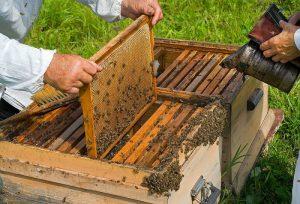 Agricultură Performantă în Moldova